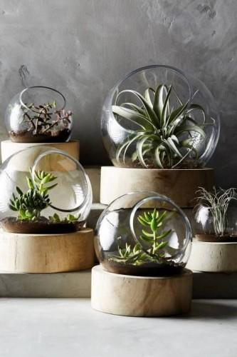 interior-succulent_001