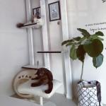 猫も喜ぶ部屋のインテリア5例!おしゃれな雑貨やキャットタワーは?