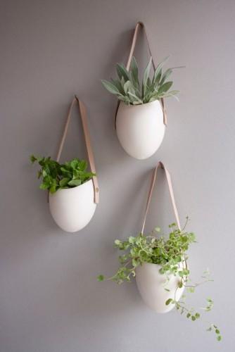 foliage-plant-cricket_02