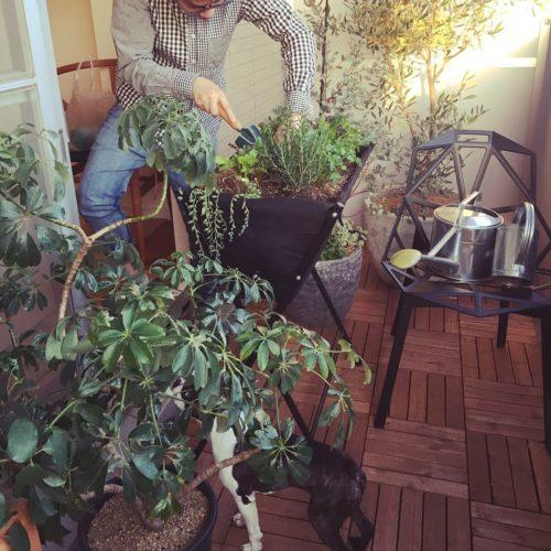 女性で、2LDKのガーデニング/観葉植物/プランター菜園/ベランダ/愛犬と暮らす家/部屋全体…などについてのインテリア実例を紹介。