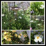 小さい庭でもイングリッシュガーデンや庭木は可能?デザイン画像集