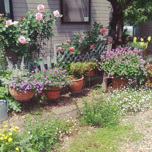 女性で、3DKのすっきりとした暮らし/ガーデン雑貨/団地/イングリッシュガーデンに憧れて♡/薔薇…などについてのインテリア実例を紹介。