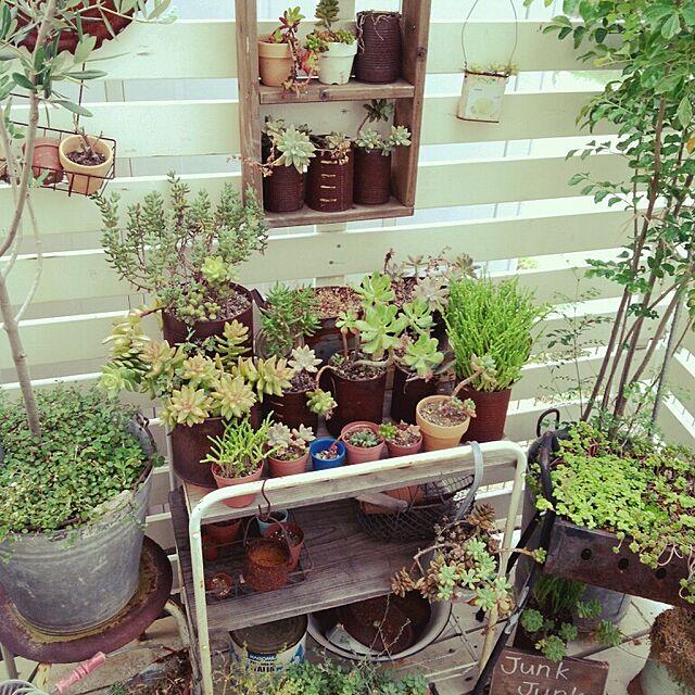 フェンスを作って、フェンス周りに棚などを置いて高さを演出しています。  たくさんの多肉植物などは小さくてかわいらしいので狭い庭にも向いていますね。