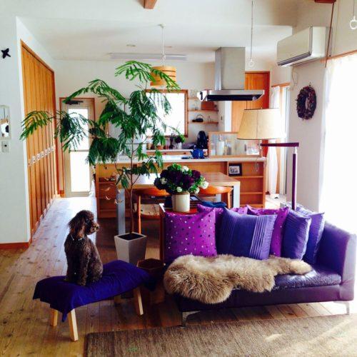 紫色の部屋のコーディネート実例写真