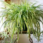 観葉植物から虫が!知っておきたい駆除の方法や害虫がつきにくい植物5選