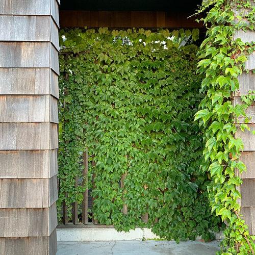 ラティスを使った庭の目隠しアイデアグリーン